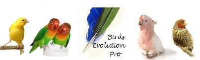 Birds Evolution